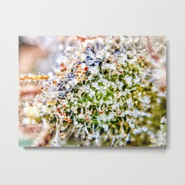 Diamond OG Kush Strain Top Shelf Indoor Hydro Trichomes Close Up View Metal Print