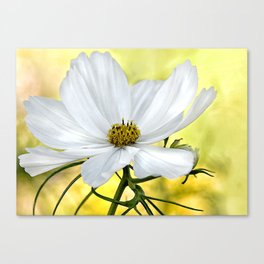 Floral White Cosmos Canvas Print