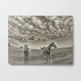 Horses of Cullman County. Metal Print