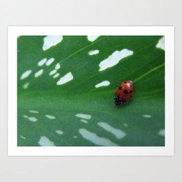 Spots on Spots Art Print