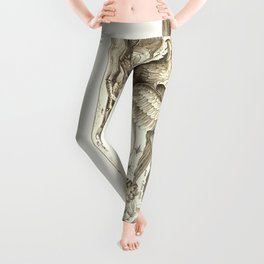 Griffin 1607 Nature Illustration Leggings