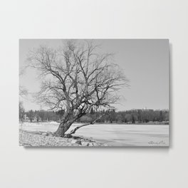 By The Frozen Pond Metal Print