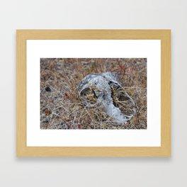 Eaten Skull Framed Art Print
