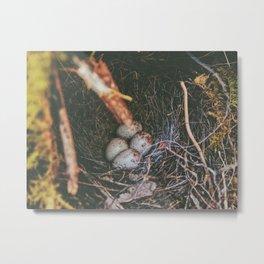 Hidden Gems • Appalachian Trail Metal Print