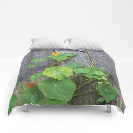 The Garden Wall Comforters