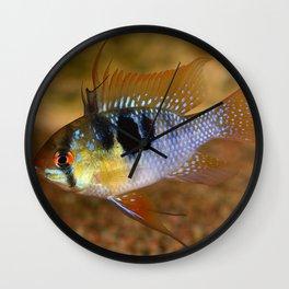 Ramirezi cichlid Wall Clock