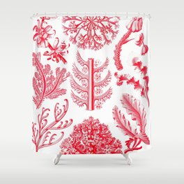 Ernst Haeckel Florideae Red Algae Shower Curtain