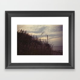 grasses2 Framed Art Print