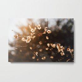 Japanese Plum Blossoms Metal Print