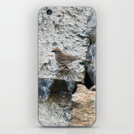 Water (Chipping Sparrow) iPhone Skin