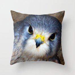 Kestrel in close-up Throw Pillow