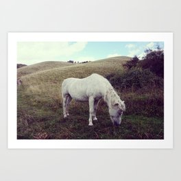 Pony Grazing Art Print