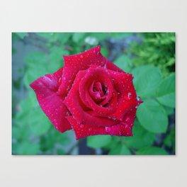 Rose Drops Canvas Print