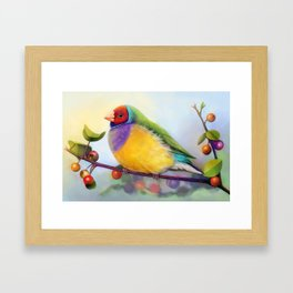 Gouldian finch realistic painting Framed Art Print