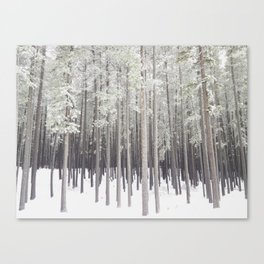 Stick Trees at Cypress Hills Canvas Print