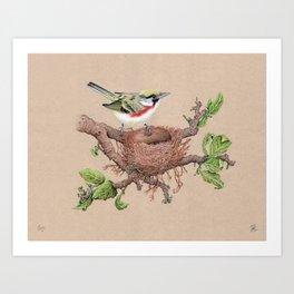Chestnut Sided Warbler in Nest Art Print