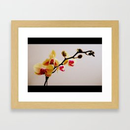 Yellow and Pink Orchid Framed Art Print