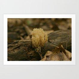 Coral Fungus Art Print