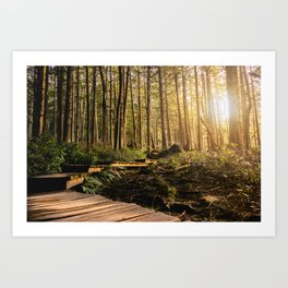 Forest Mountain Wanderlust Boardwalk - Nature Photography Art Print