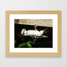Sunlit woodpecker Framed Art Print