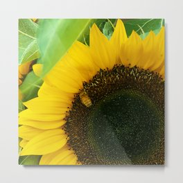 Big, Bright Sunflower and Honey Bee Metal Print