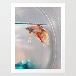Fish in a fishbowl Art Print