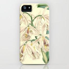 Cattleya maxima iPhone Case