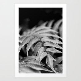 Deep In - leaves & fern Art Print