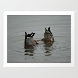 Duck Bums Art Print