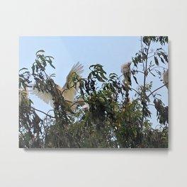 Young Cockatoos Metal Print