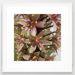 Pineapple Lily 2 Framed Art Print