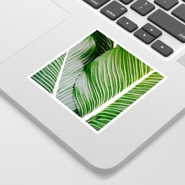 Big Leaves - Tropical Nature Photography Sticker