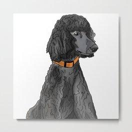 Misza the Black Standard Poodle Metal Print