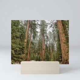 Sequoias in the Fog Mini Art Print