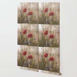 Poppy in sunrise my world Wallpaper