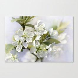 Spring white 044 Canvas Print
