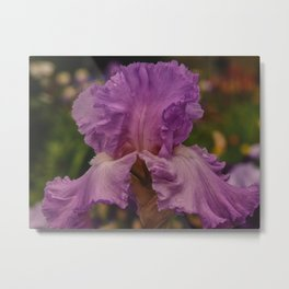 "Iris Flower ""Annabel Jane"" Metal Print"