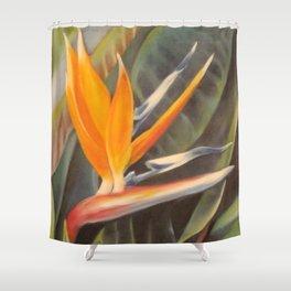 Bird of Paradise 3  Shower Curtain