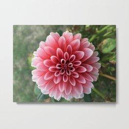 Dahila Flower Metal Print