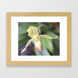 Lady Slipper Framed Art Print