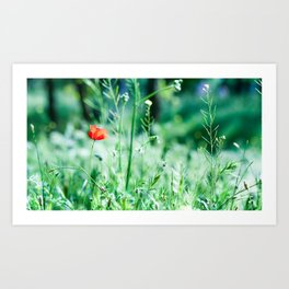Red miracle Art Print
