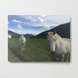 Happy White Horses - Sun Valley, Idaho Metal Print