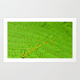 Robious Landing Park: Fern in the Woods Art Print