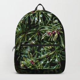 Coniferous Rainforest Backpack