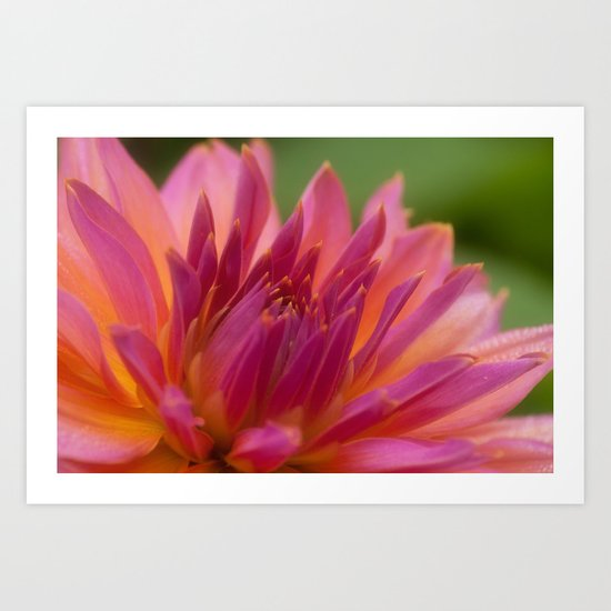 "Dahlia ""water lily"" Art Print"