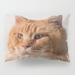 Purebred red Maine Coon cat lying on the floor at home Pillow Sham
