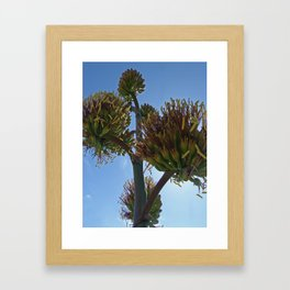 Agave Flower Framed Art Print