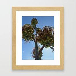 Agave Flower Framed Art Print