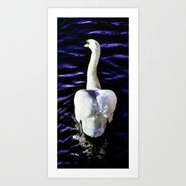 Follow the swan Art Print