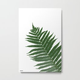 Dryopteris filix-mas aka Wood fern Metal Print